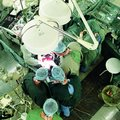 Трансплантация органов и смерть мозга
