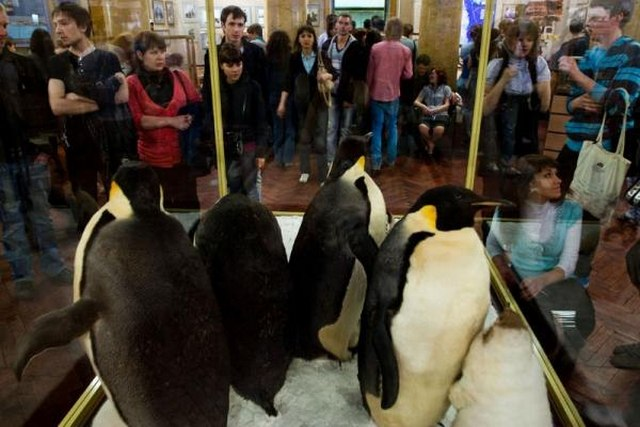 Музей Арктики и Антарктики: первая экскурсия в 2016 году