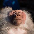 Можно ли верить в Бога и теорию эволюции?