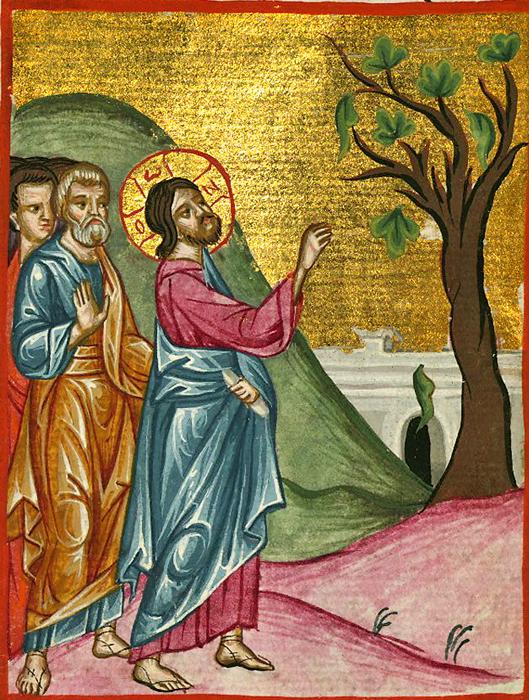 Бесплодная смоковница: Может ли у Бога кончиться терпение?